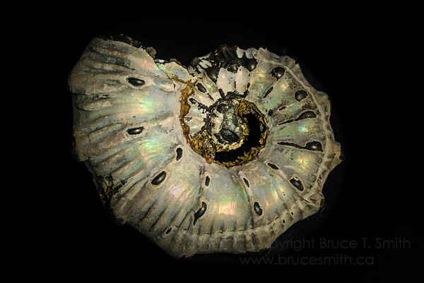 053 Ammonite Closeup
