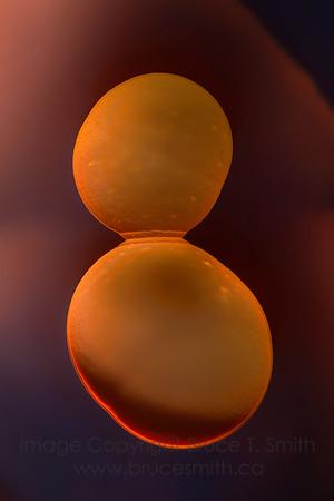 296 Orbs