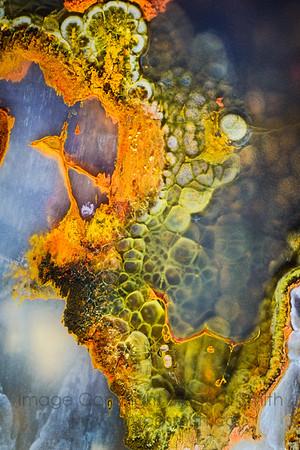 159 Strange Green Lizard Skin