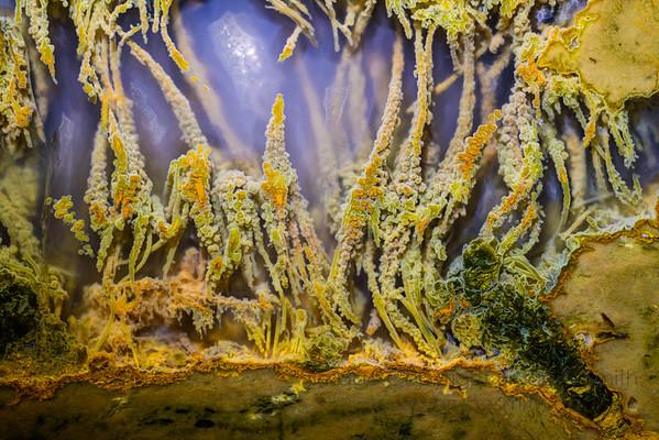 089 Undersea Life