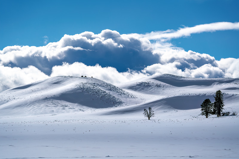 Yellowstone National Park - Winter Beauty