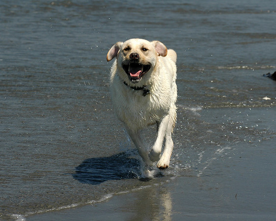 Ruby at Edmonds Beach Dog park