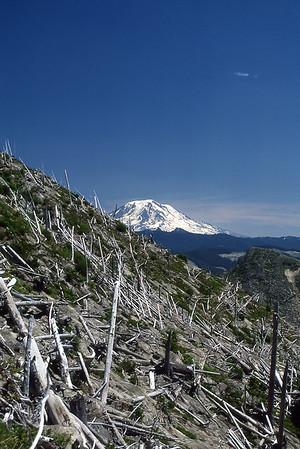 Toothpick trees and Mt. Adams