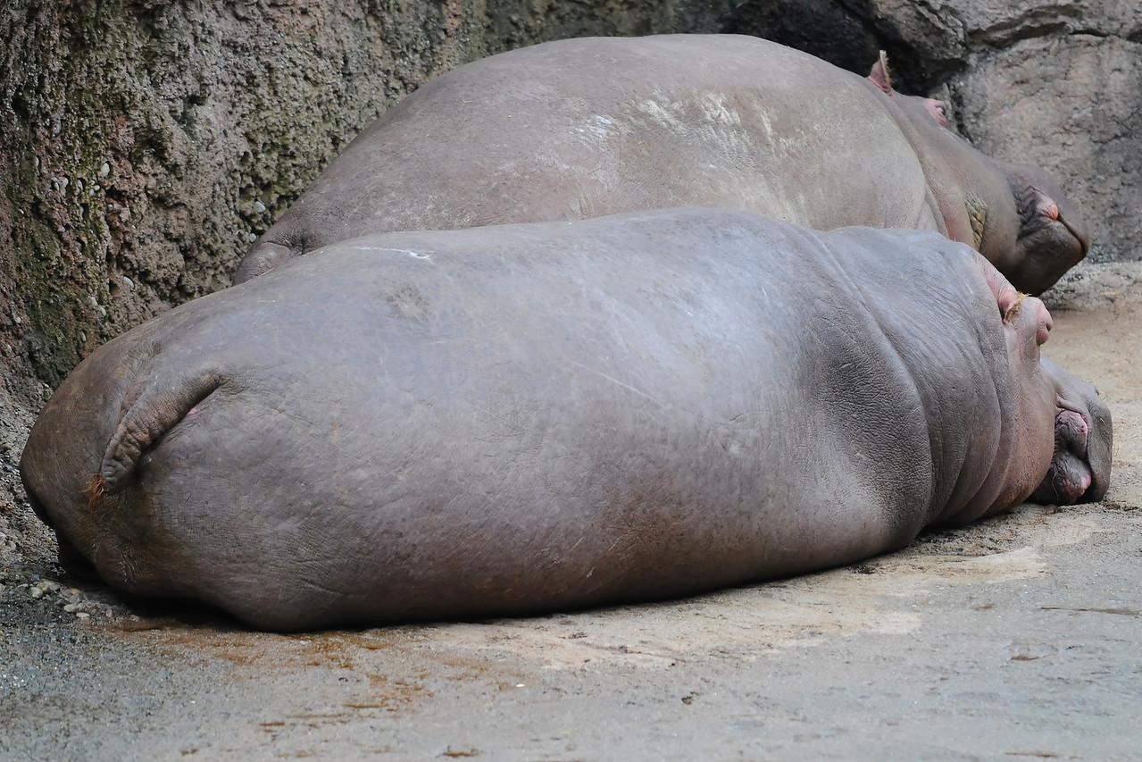 Hippo Butt
