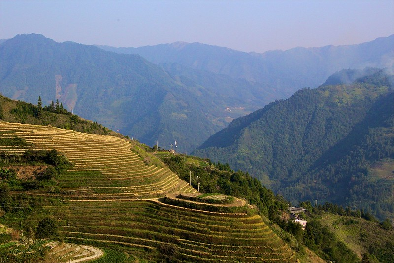 View from Ping'an of the Gorgeous Terraced Rice Paddies