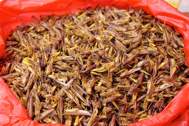 CRICKETS FOR LUNCH?