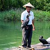 Fishing with Cormorants