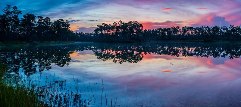 Long Pine Dawn