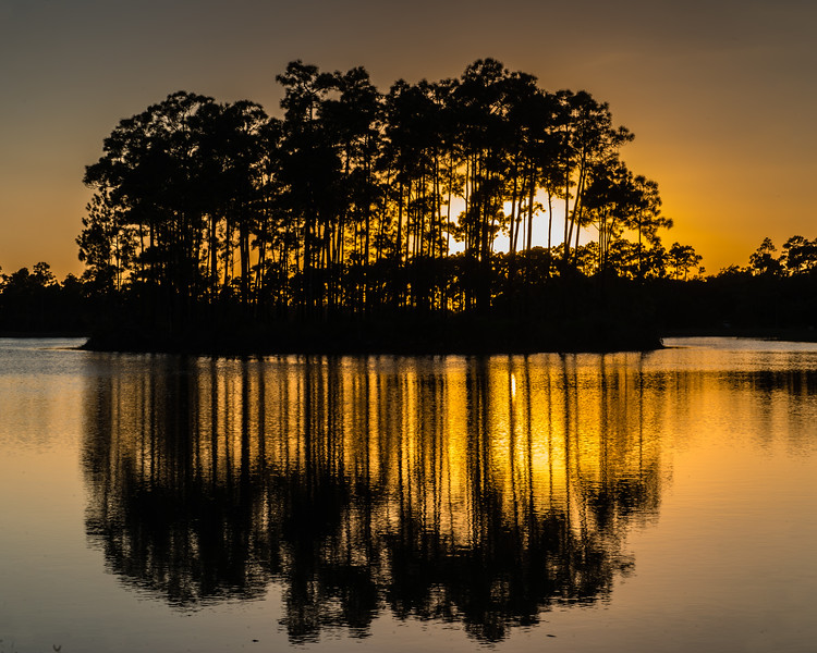 Long Pine Gold