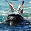 Birds on a whale
