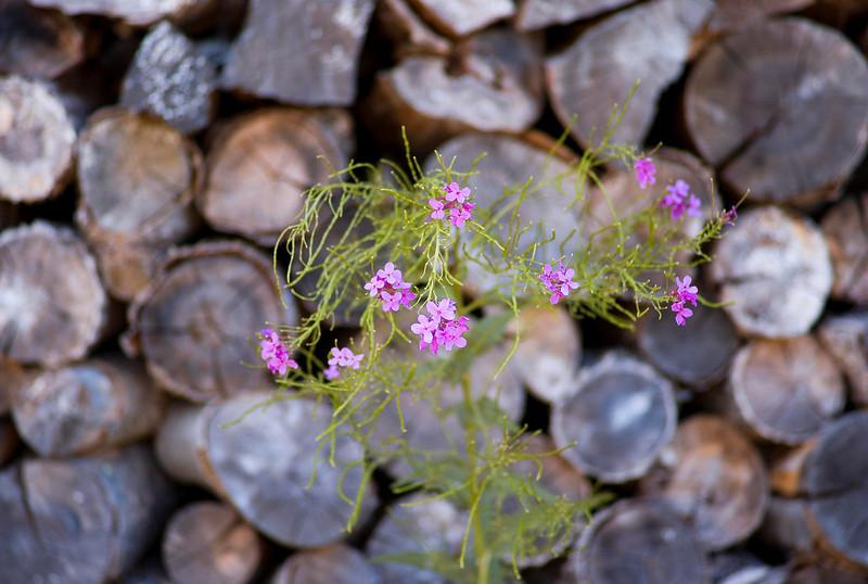 FlowersWood.jpg