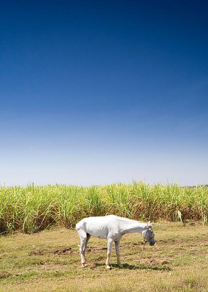 Cuba Horse 2.jpg