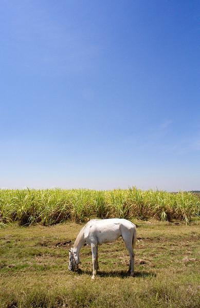 Cuba - Horse.jpg