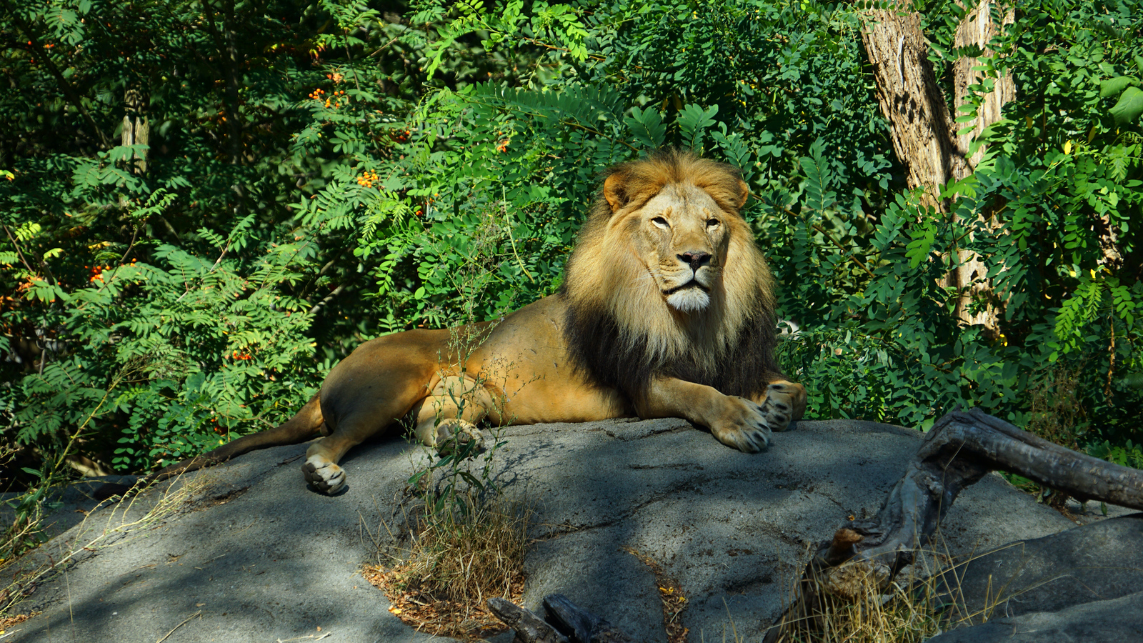 His Majesty