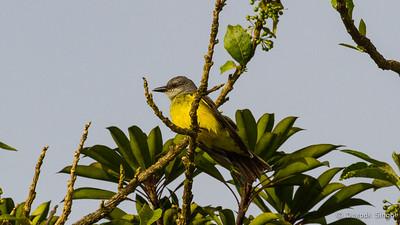Monteverde 2020: