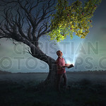 Bringing life to a tree