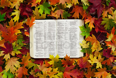 Bible in autumn