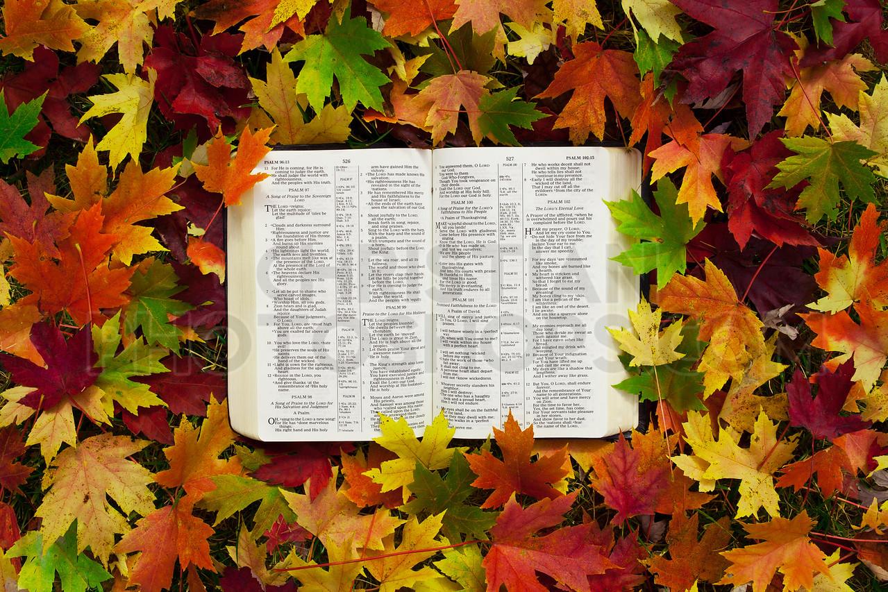 Bible in autumn