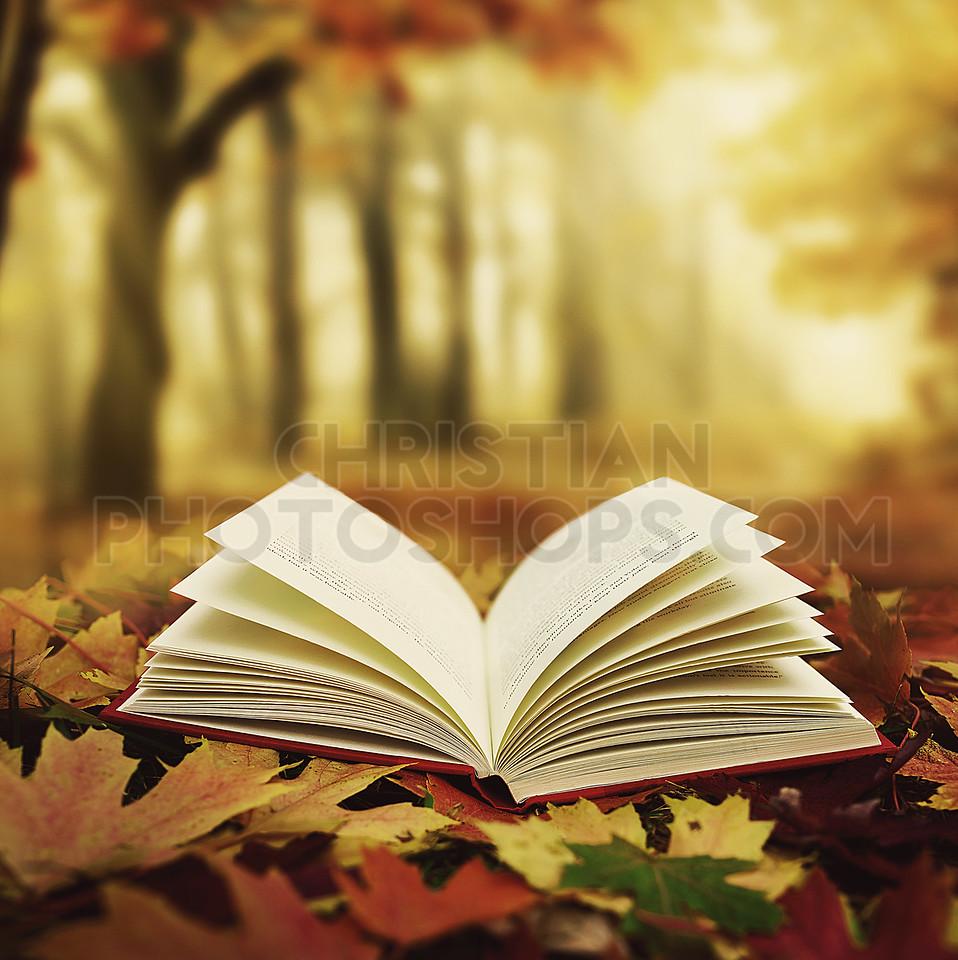 Bible in fall