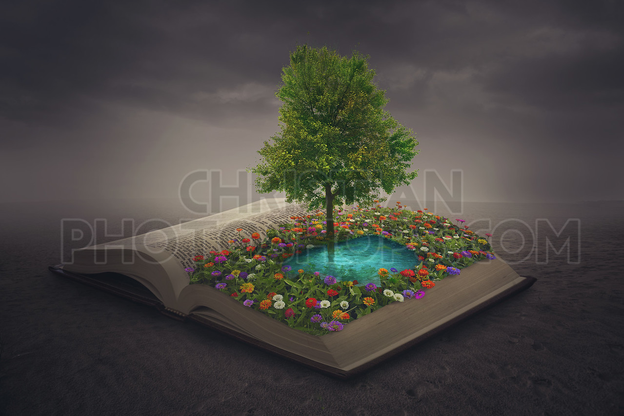 Oasis on top of a book
