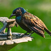 Grackle Statue