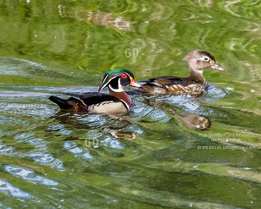 Mr and Mrs Woodduck