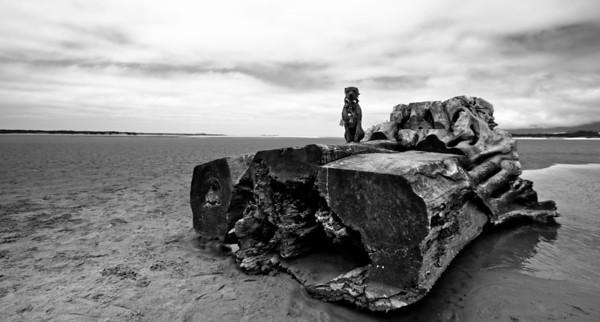 Spirit on the Oregon Beaches