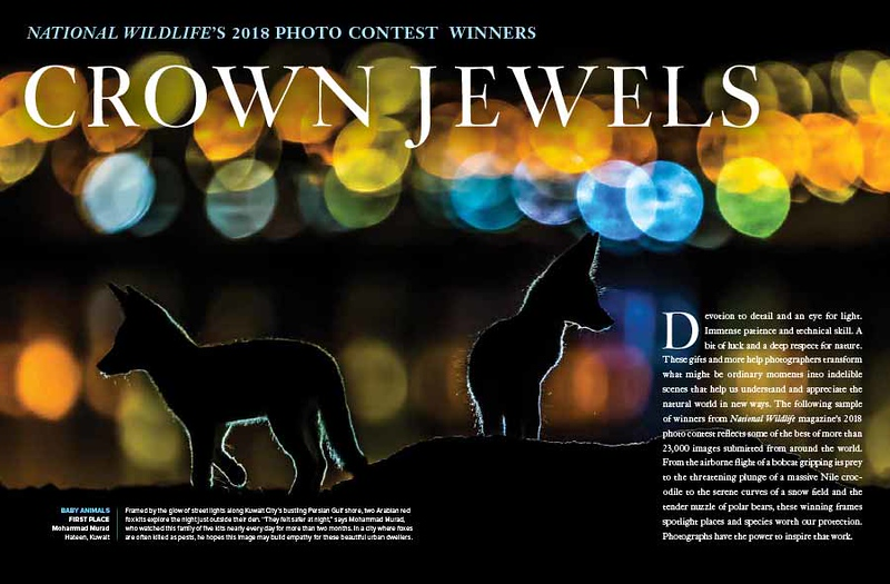 "<a href=""https://www.nwf.org/Magazines/National-Wildlife/2019/Dec-Jan/PhotoZone/2018-Winners"">https://www.nwf.org/Magazines/National-Wildlife/2019/Dec-Jan/PhotoZone/2018-Winners</a>"