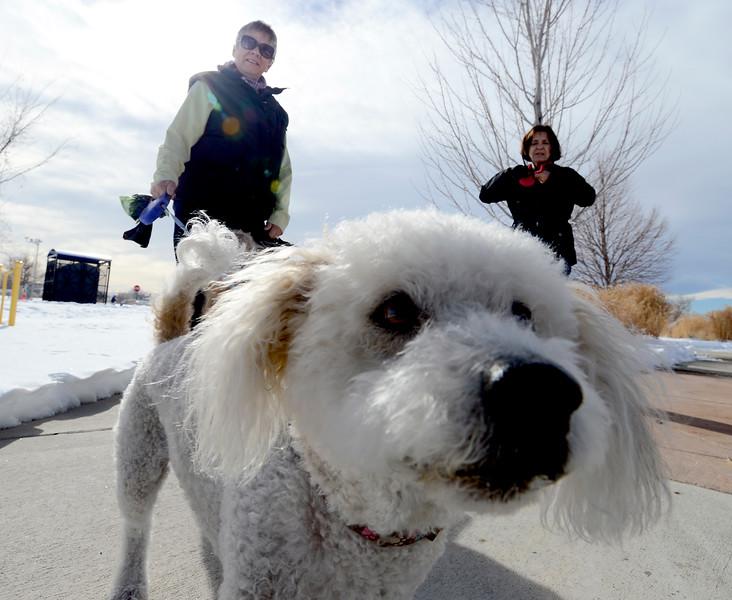 The Boneyard Dog Park in Erie