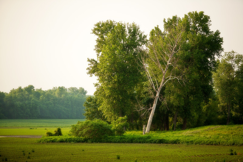 The White Tree  April