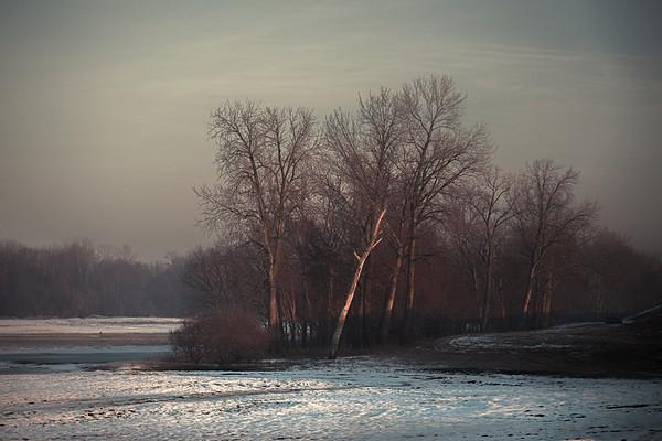 The White Tree December