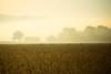 Farmscape #12