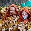 Up to their ears in leaves