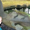 Checking out the Kimodo Dragon