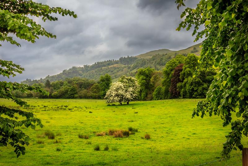 Near Loch Lomond, Scotland