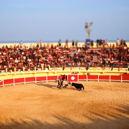 Bull Fight, Saintes-Maries-de -lar-Mer, Camargue, South France