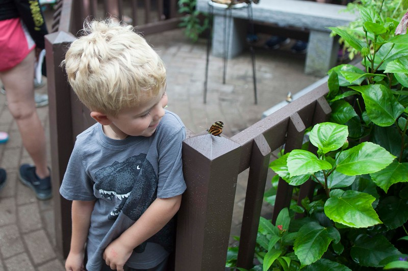Andrew Stebbins, 4, of Dracut makes friends with a butterfly. SUN/Chris Lisinski