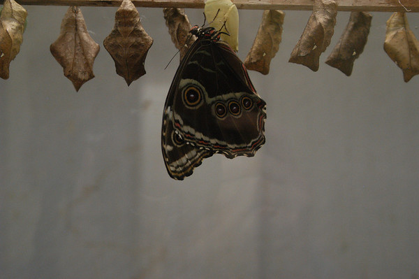 The Butterfly Place