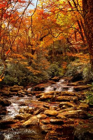 North Carolina Fall 2010