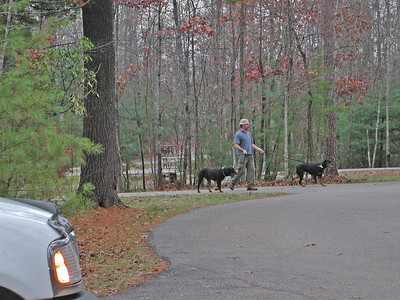Jon Walks Gino & Miss Heidi
