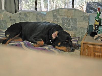 Miss Heidi on the Sofa