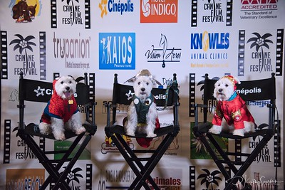 Canine Film Festival at the Cinéapolis