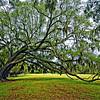 The Majestic Oak on Middleton Plantation, SC