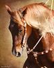 I'll Cowboy Up (II)