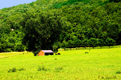 A working Cattle Farm Pasture, Kent CT RTE 7