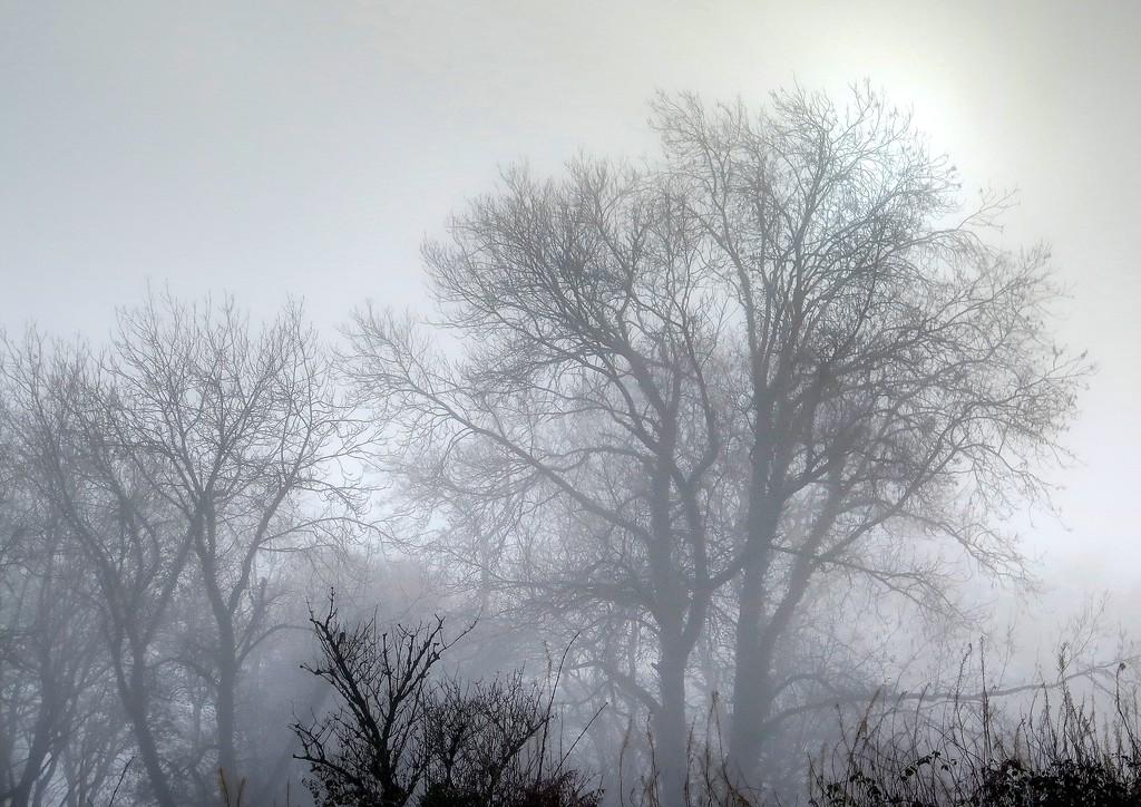 30 Dec 2016 - The sun makes a vain attempt to pierce the mist