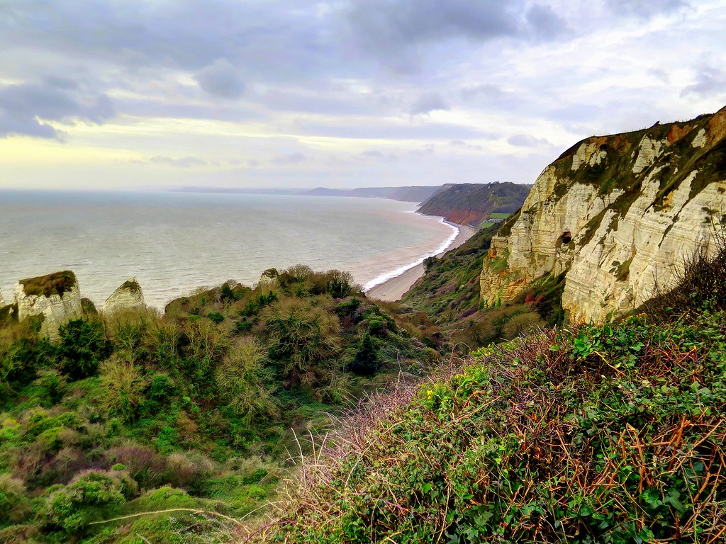 24 Dec 2016 - The view from my lunch stop - looking West along Hooken Cliffs towards Sidmouth