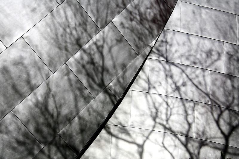 Tree Branch Shadows on Disney Hall - Los Angeles