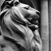 Lion Outside The New York Central Library - NY, NY