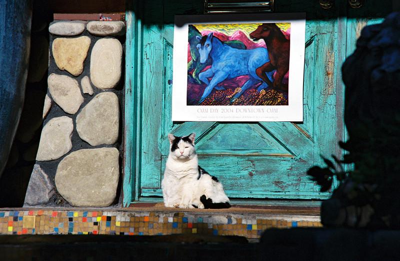 Cat On Porch - Ojai, CA
